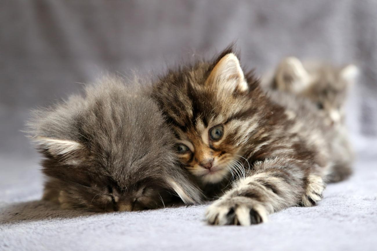 douceur du chat